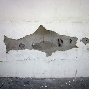 Stucco Shark