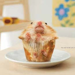 Muffin Shaped Hamster