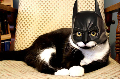 Cat Wearing A Batman Mask