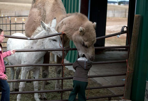 Kid vs Camel