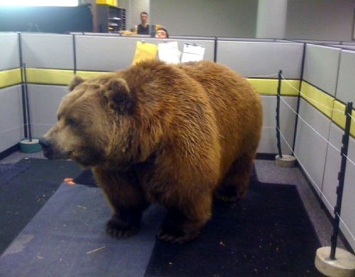 Bear In An Office Cubicle Prank