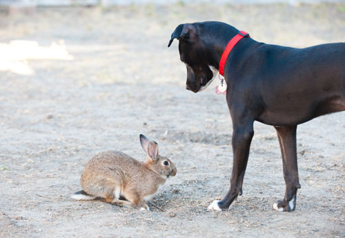 Dog With Rabbit Photograph