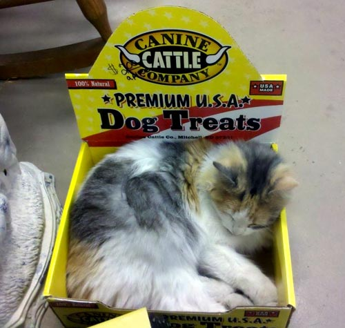 Cat Sleeping In Dog Teat Box