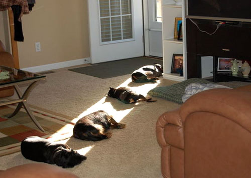 Dogs Napping In The Sun