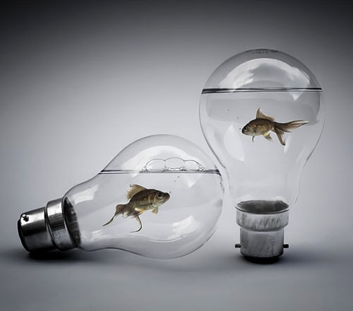 Fish In Light Bulbs