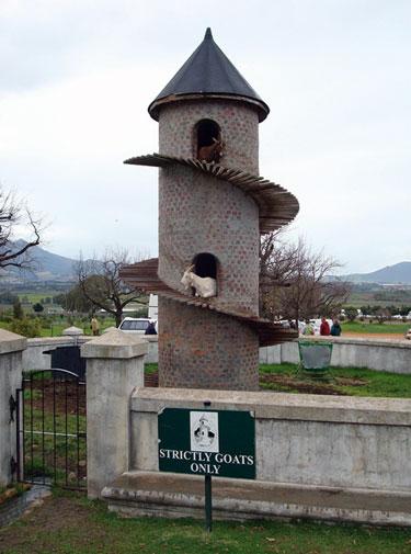 Goat Sanctuary