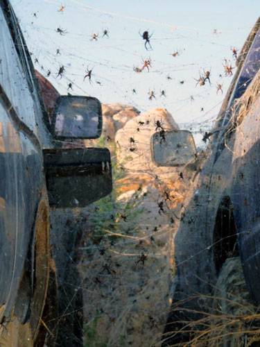 Many Spiders Between Two Parked Cars