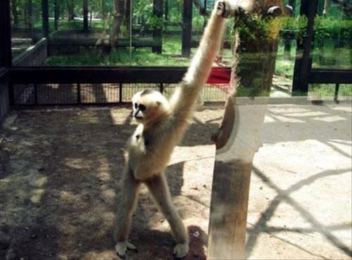 Supermodel Monkey