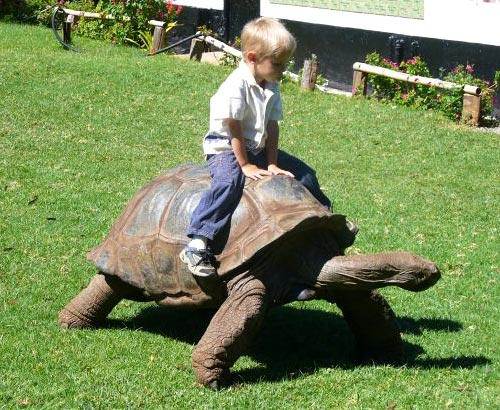 Boy Riding A Turtle