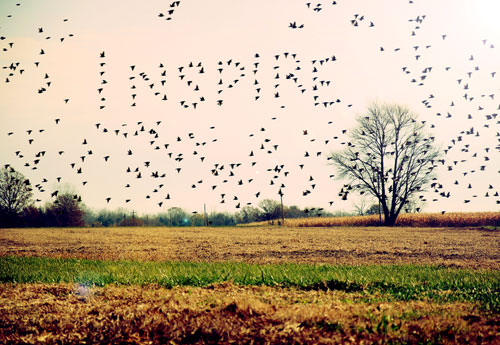 Photo Manipulation of Birds Spelling Inspire