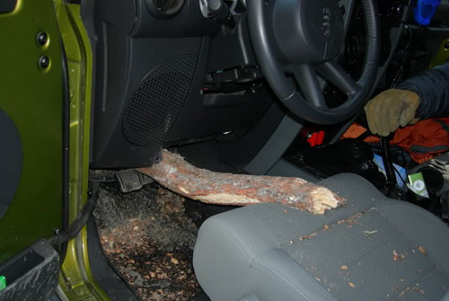 Tree Through Jeep Floorboard