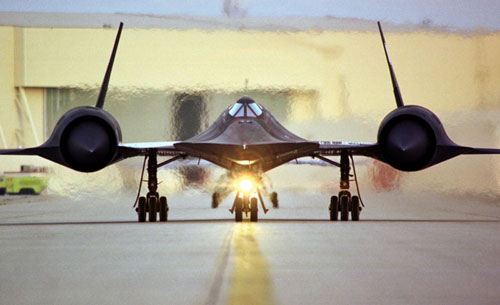 Heat Wave Of Blackbird On Tarmac