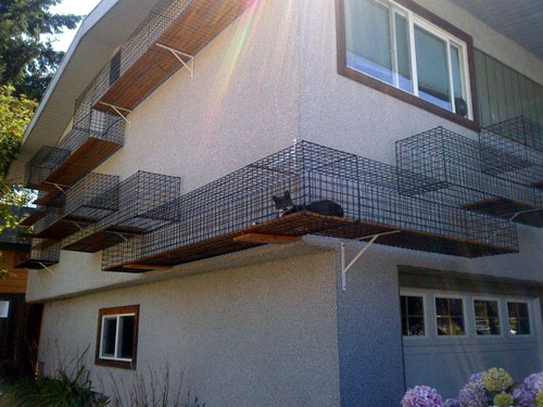 Outdoor Cat Walk Habitat