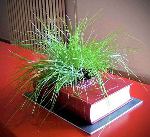 Recycled Book Planter