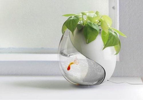 Fish Bowl Planter