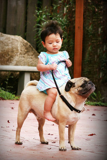 Child Riding A Pug