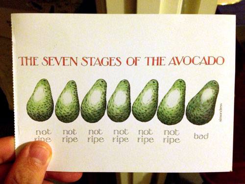 Stages of Avocado