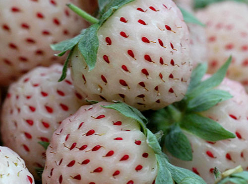 White Pineberries