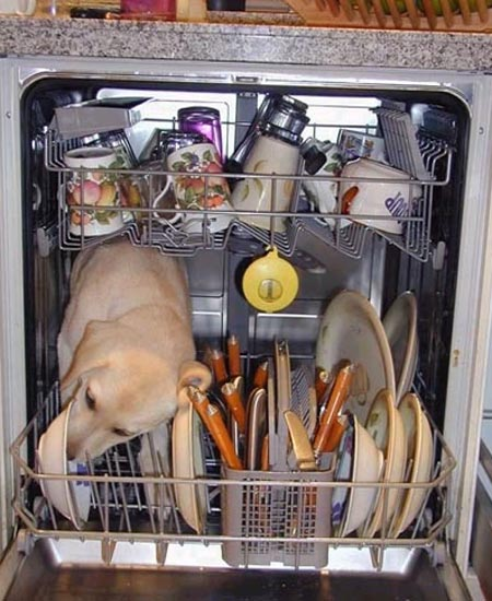 Dog Washing Dishes