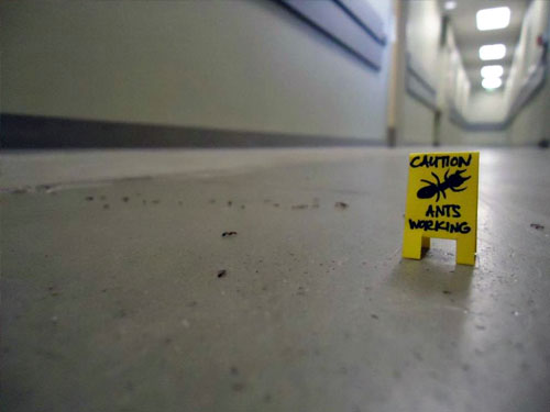 Caution Ants Working Sign