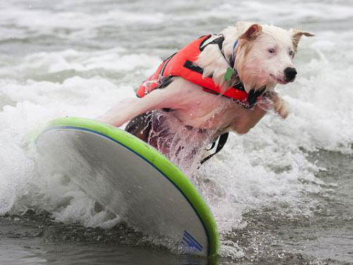 Surfer Dog