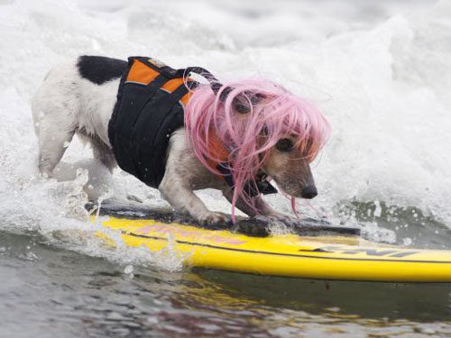 Surf Dog at Imperial Beach
